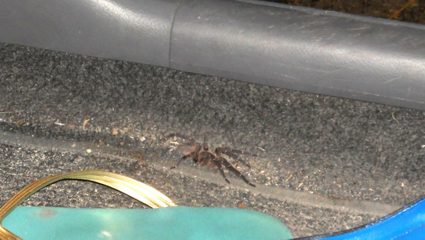 Scary spider!
